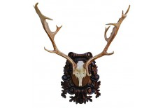 Carved Taxidermy trophy shield base for a fallow deer trophy